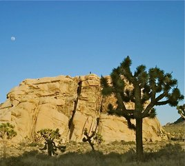 Full moon rising over Joshua Tree/ Photo by M Payne