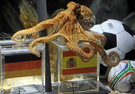 Paul the octopus has doomed Germany's chances in this afternoon's World Cup semi-final match versus Spain. (Photo: Associated Press)