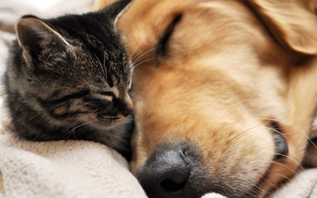 Polls say there are partisan differences between cat and dog owners. What do your pets say about your politics?