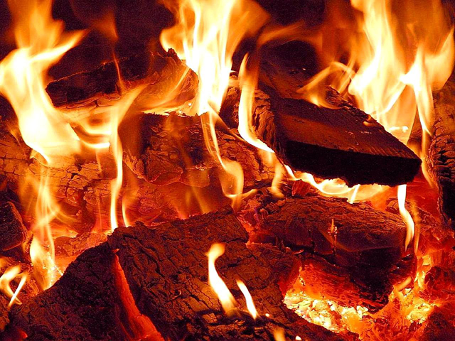 Wood-burning power plants: Misguided climate change solution?