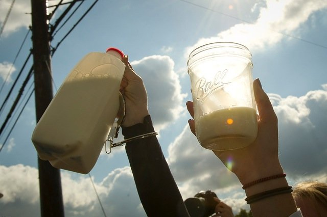 Demonstrators raise glasses and jugs of raw milk in a toast Nov. 1, 2011, during a protest in front of the Food and Drug Administration headquarters in Silver Spring, Md. The FDA has banned interstate transportation of raw milk. The milk used during the demonstration w