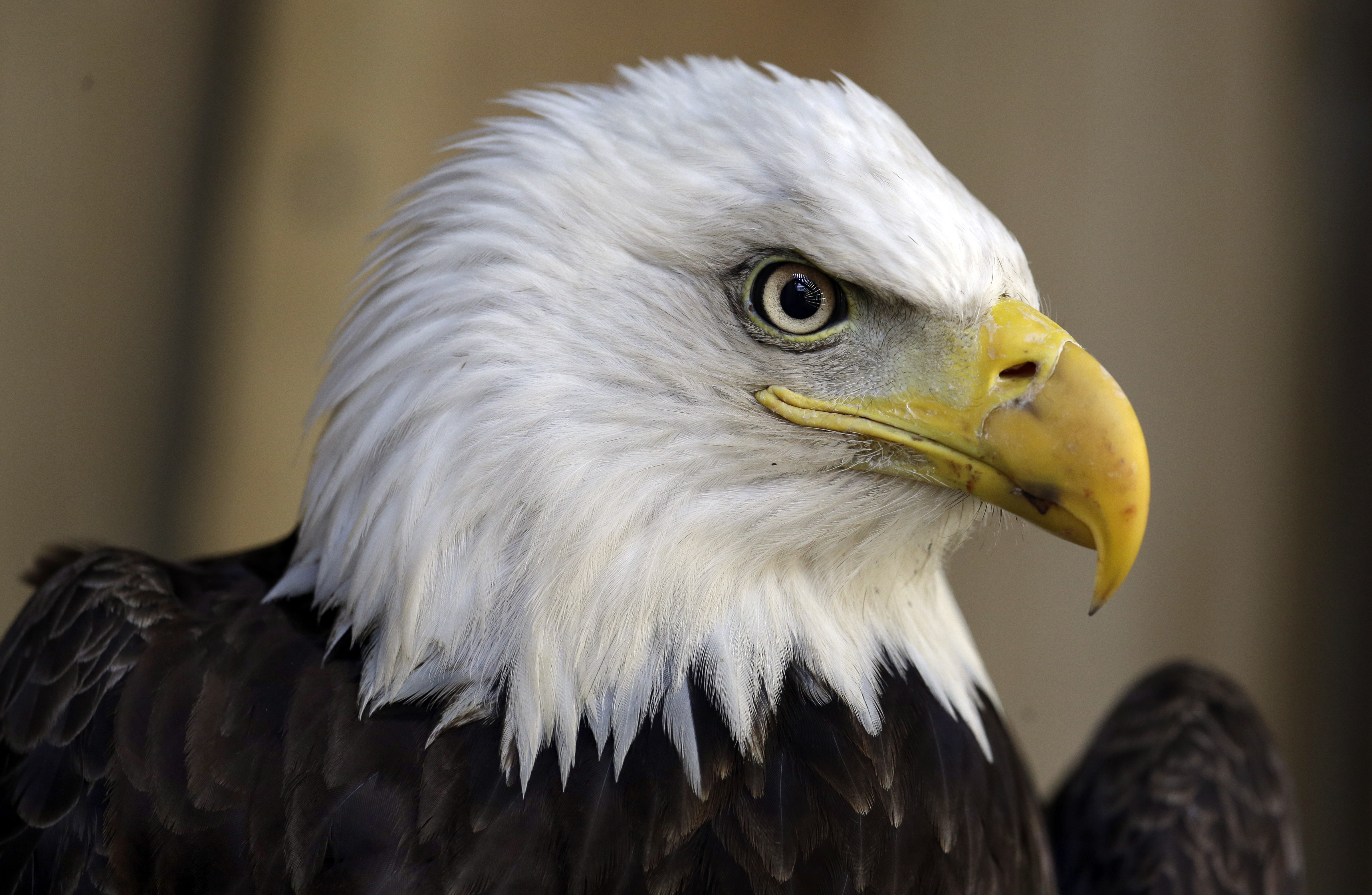 Eagle slaughter: Wind farms kill 67 eagles in 5 years