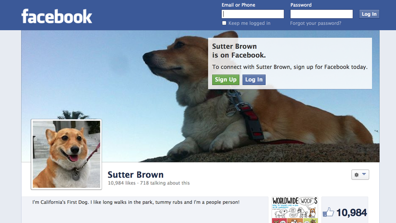 Sutter Brown, California's first dog, has his own Facebook page. (Facebook)