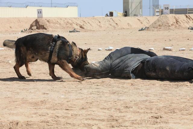 Dog bites terrorist