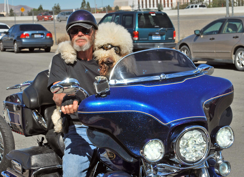 Dog rides Harley with Reno man; Moki bad to bone - Washington Times