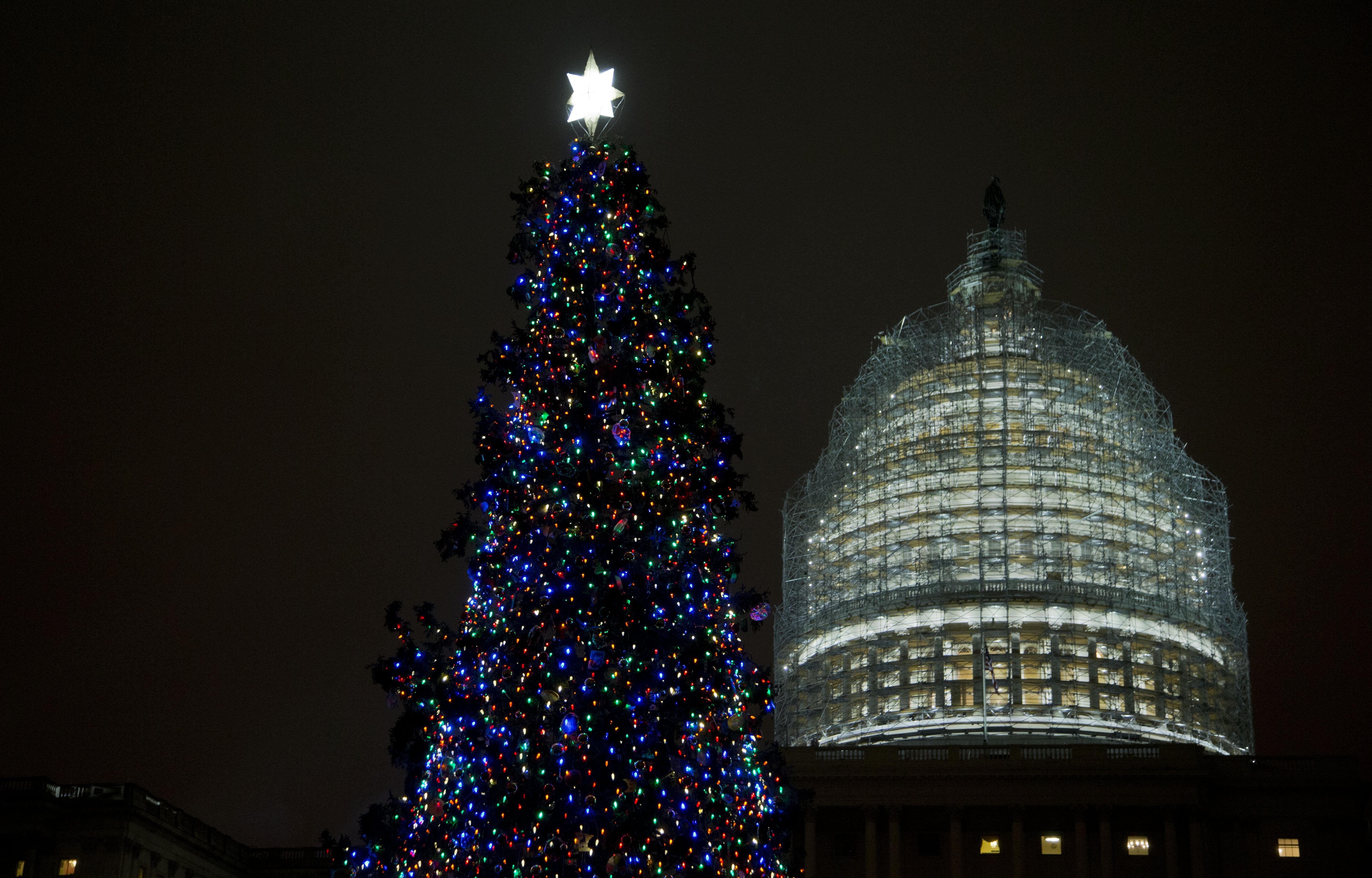 Photos: A Christmas tree comes to the Capitol - Washington Times