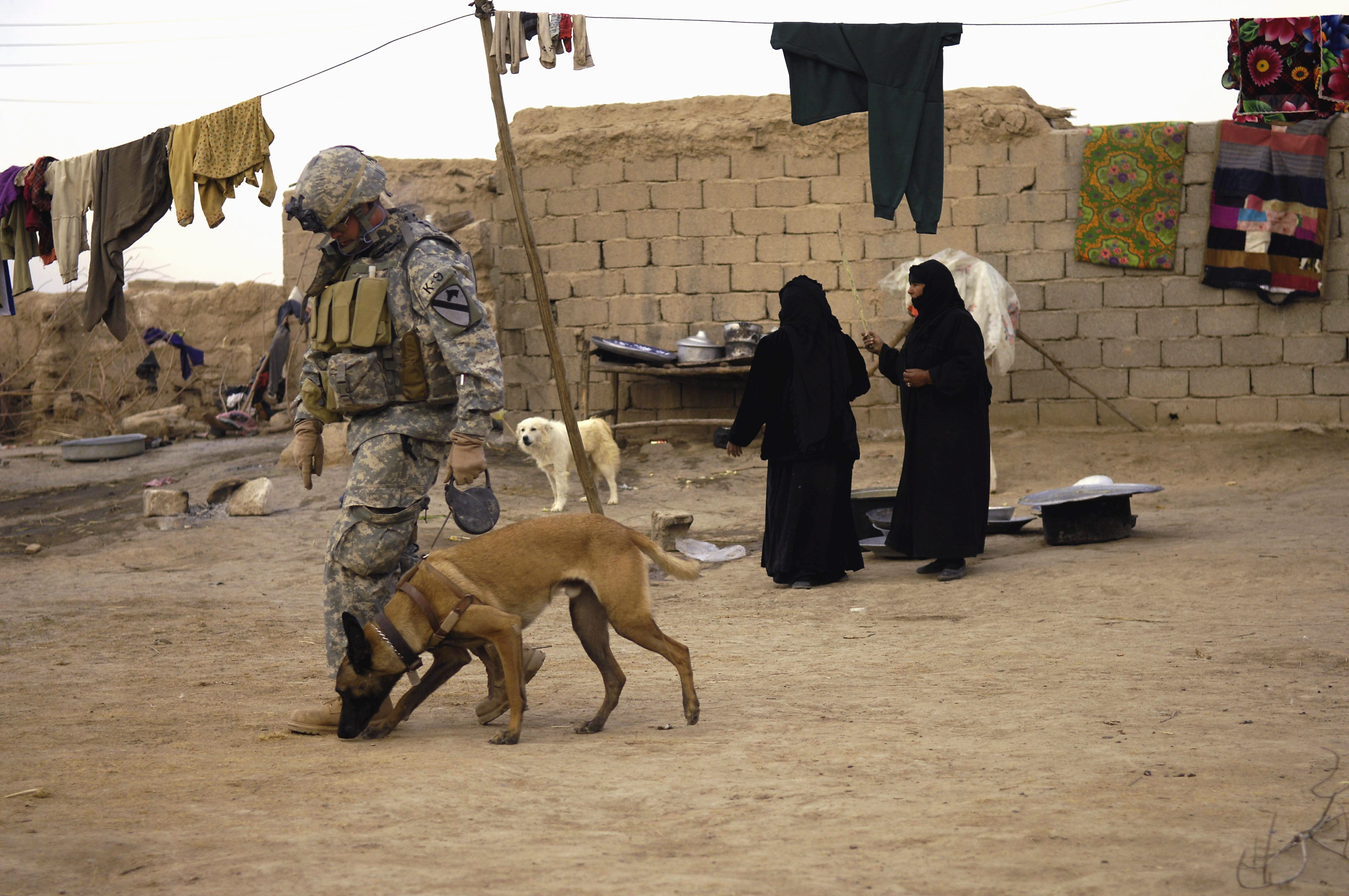 Military Dogs Return To Us Adoption By Battlefield Handlers