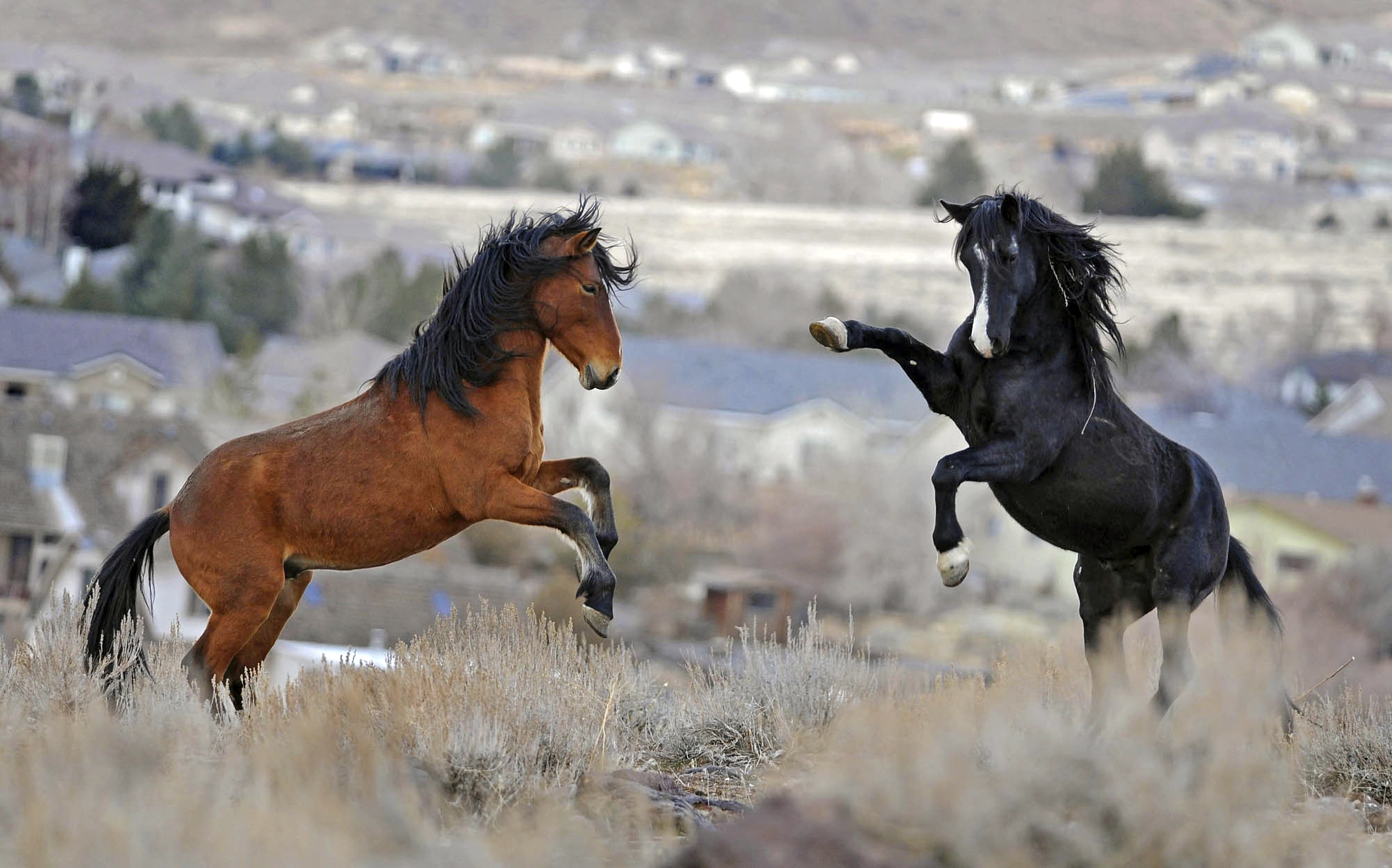federal court orders restoration of 23000 acres for wild horses washington times
