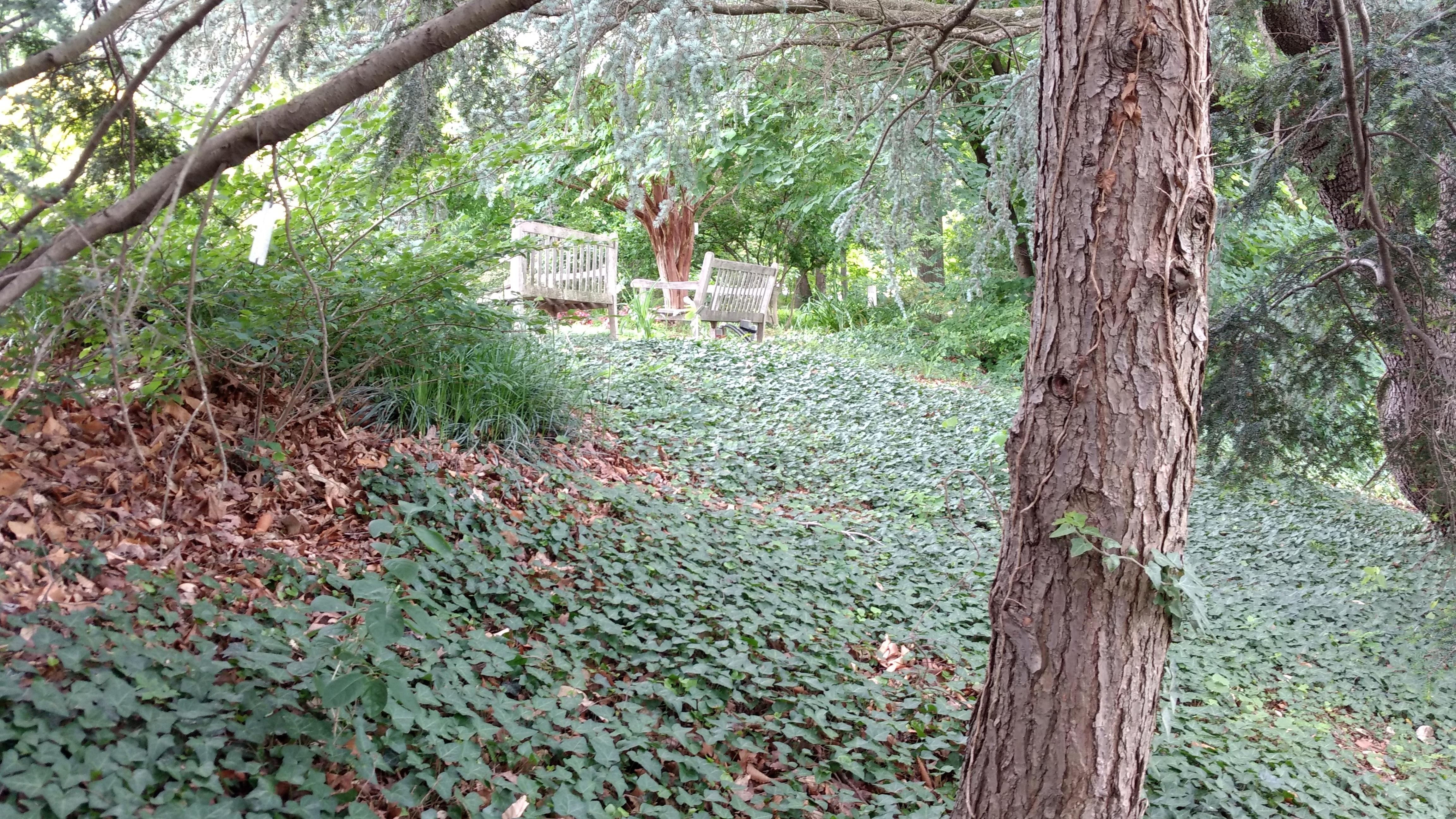 National Arboretum Fights Invastive Species Washington Times