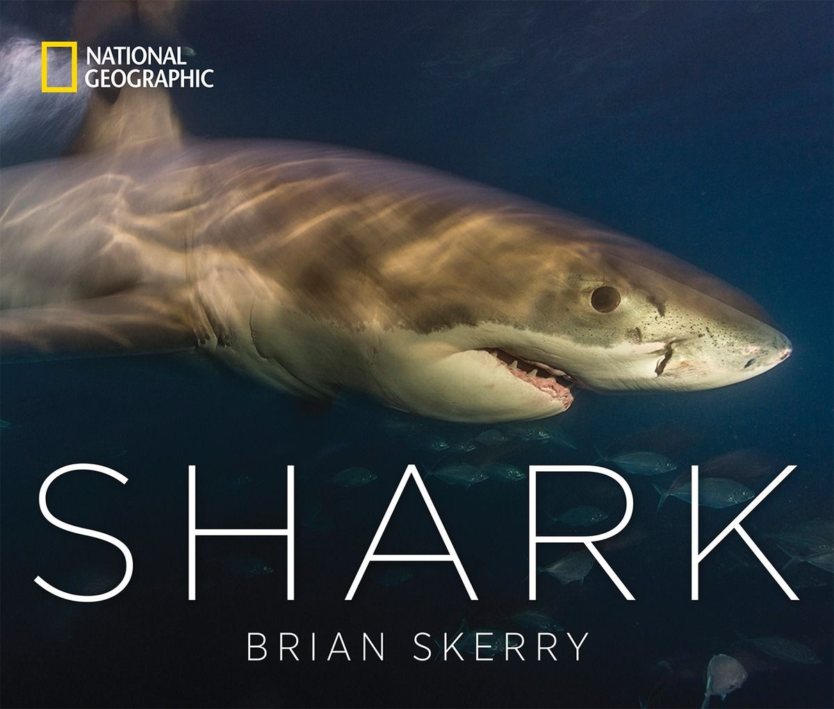 'Sharks' exhibit at National Geographic highlights photographer Brian Skerry's work