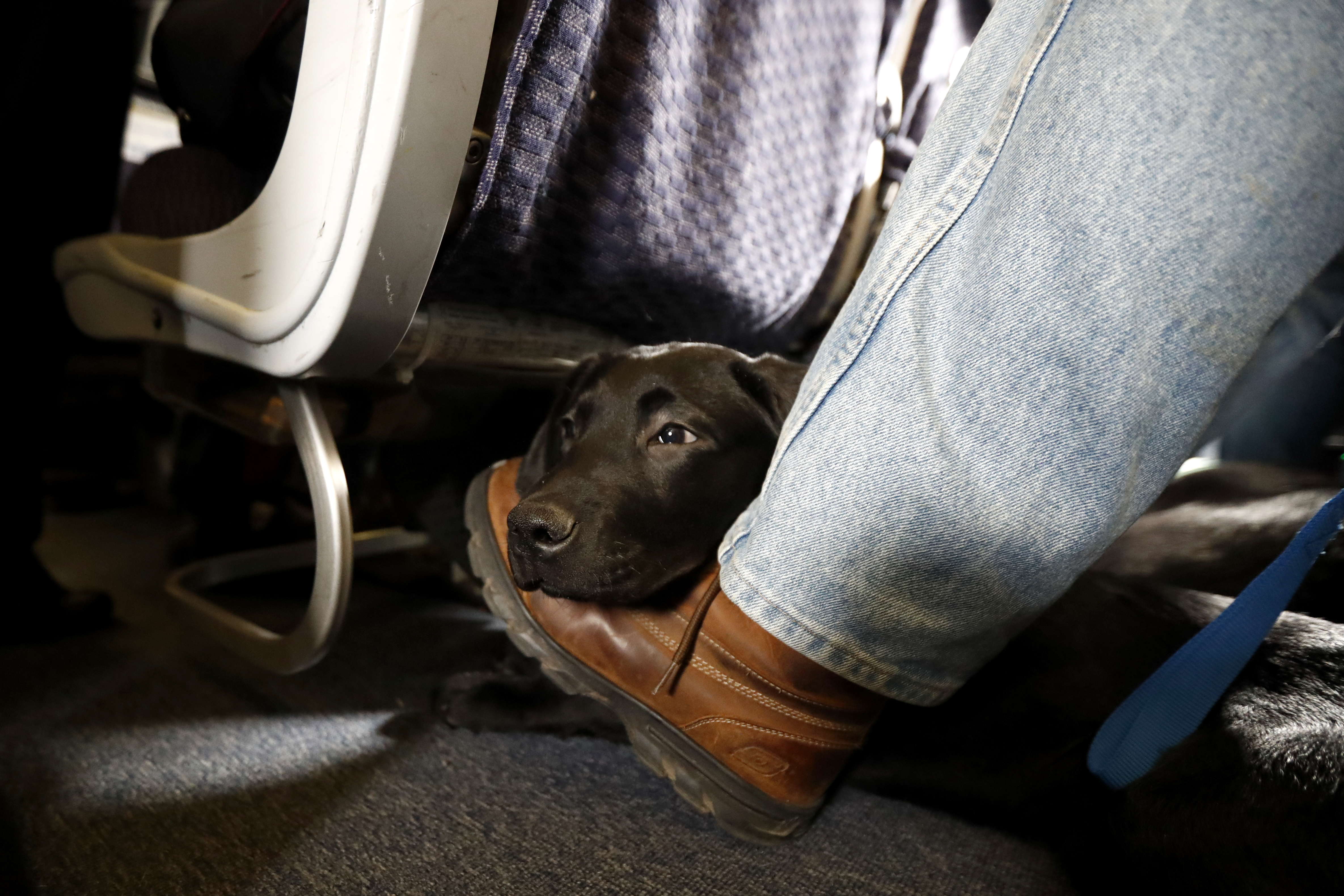 The world outraged the killing of a puppy that interfered with airplanes at the airport