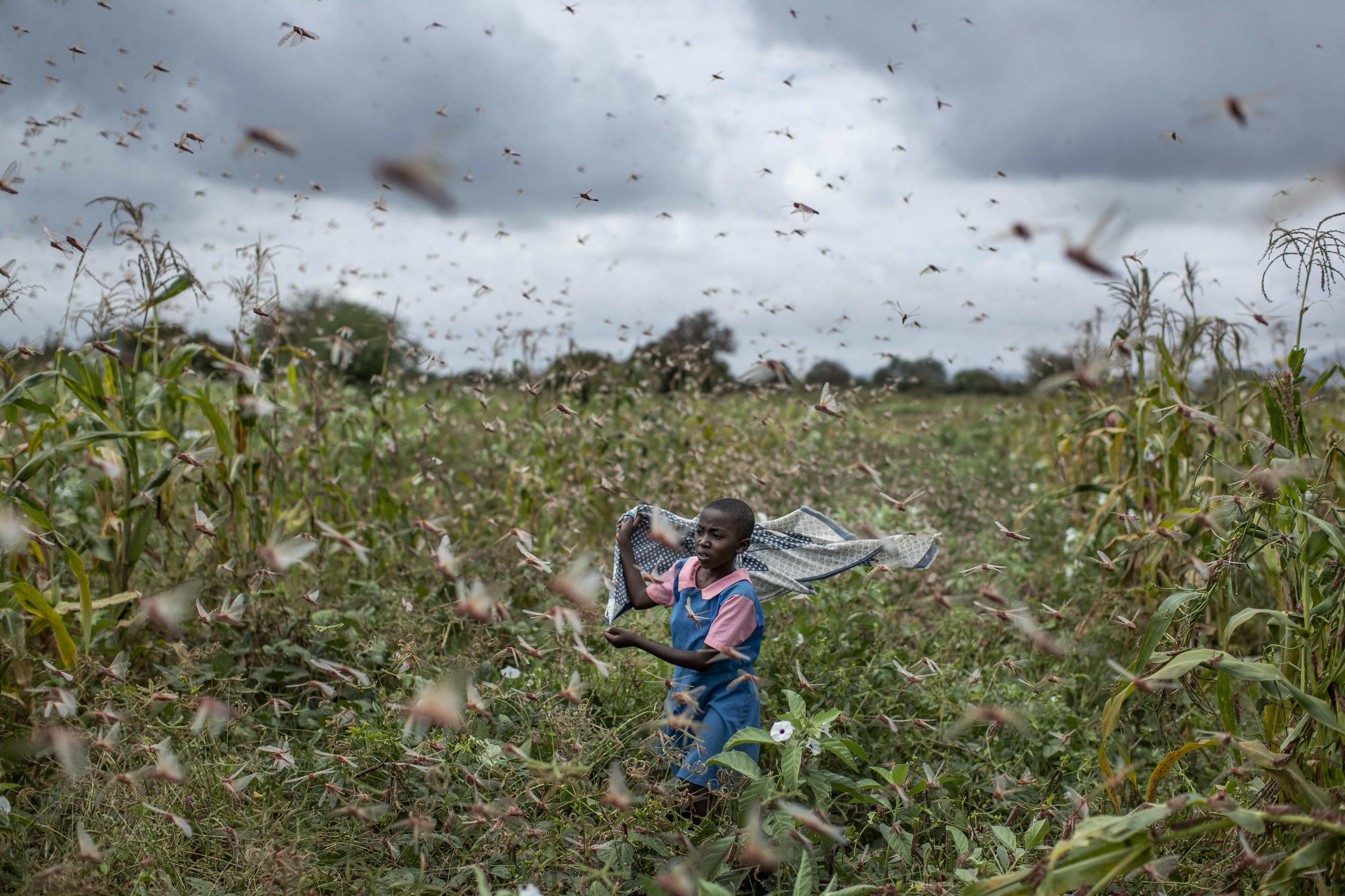 This Is Huge Locust Swarms In Africa Are Worst In Decades Washington Times
